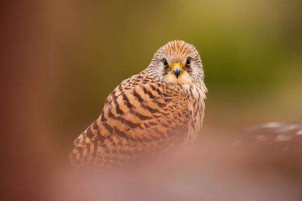 6 JUN – Fotografía de fauna por Antonio Caño